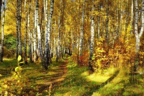 Текст песни «Отговорила роща золотая» Сергея Есенина
